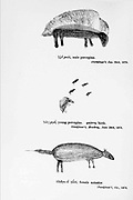 Bushmen (san) rock painting of animals. painted on the walls of caves From the book '  Specimens of Bushman folklore ' by Bleek, W. H. I. (Wilhelm Heinrich Immanuel), Lloyd, Lucy Catherine, Theal, George McCall, 1837-1919 Published in London by  G. Allen & Company, ltd. in 1911. The San peoples (also Saan), or Bushmen, are members of various Khoe, Tuu, or Kx'a-speaking indigenous hunter-gatherer groups that are the first nations of Southern Africa, and whose territories span Botswana, Namibia, Angola, Zambia, Zimbabwe, Lesotho and South Africa.