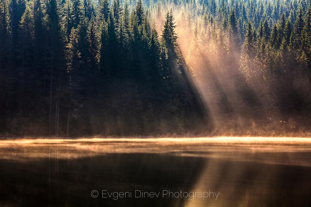 Soft sunbeams in the lake