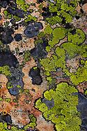 Colorful lichen patterns on rocks along McDonald Creek in Glacier National Park, USA
