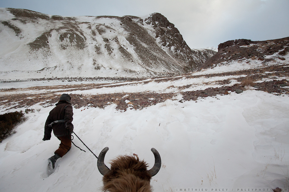 A man leads a yak, between Kher Metek and Mirzo Murad shepherd house..Going back down to Sarhad village with a yak caravan led by 2 Wakhi traders: Shur Ali and Roz Ali...Trekking down the Wakhan frozen river, the only way down to leave the high altitude Little Pamir plateau, home of the Afghan Kyrgyz community.