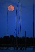Moonrise over Pearl River swamp - Mississippi