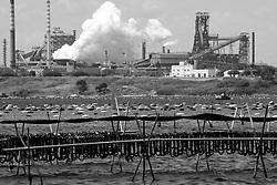 Taranto, circummarpiccolo, filari di cozze appese pronte per essere raccolte, sullo sfondo ciminiere emettono fumi tossici.