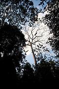 Parauapebas_PA, Brasil...Floresta Nacional de Carajas em Paraupebas, Para...The Carajas National Forest in Paraupebas, Para. ..Foto: JOAO MARCOS ROSA / NITRO