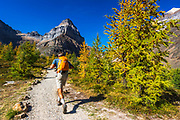 Hiker in Larch Valley, Banff National Park, Alberta, Canada