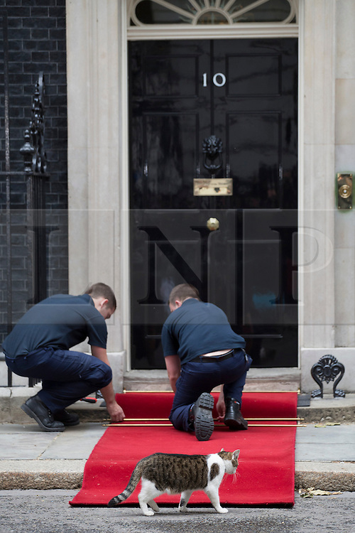 © licensed to London News Pictures. London, UK 16/06/2013. A red carpet is being prepared outside No10 for Russian President Vladimir Putin's arrival at Downing Street for talks with David Cameron ahead of the G8 summit on Sunday, 16 June 2013. Photo credit: Tolga Akmen/LNP