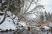 Fallen and standing broadleaved trees along the beaver pond, Gauja National Park (Gaujas Nacionālais parks), Latvia Ⓒ Davis Ulands | davisulands.com