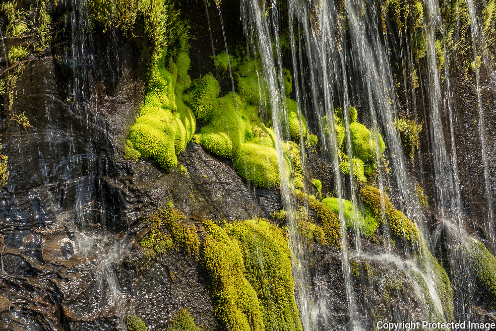 Mosses of many varieties are the hardy inhabitants of Iceland's highlands.
