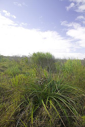 South America, Uruguay, Rocha, Parque Nacional Santa Teresa, Estacion Biologica Potrerillo de Santa Teresa, plants