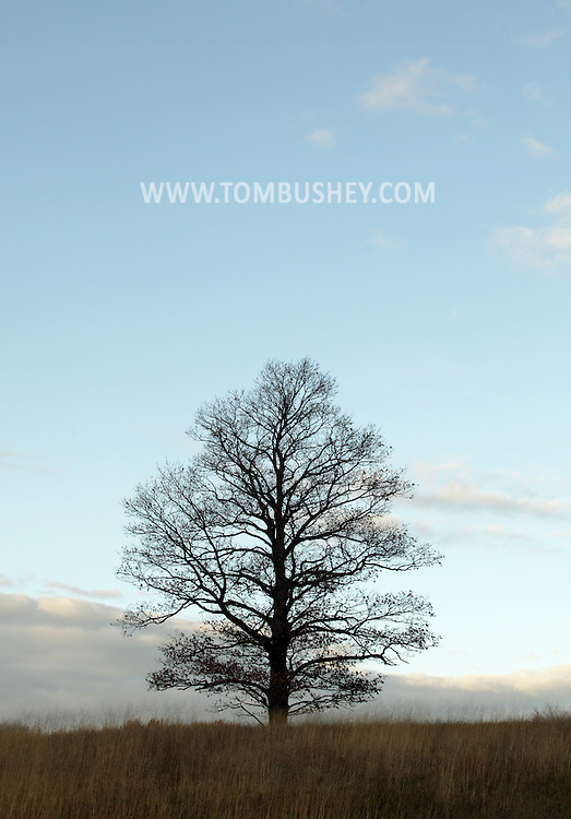 Mountainville, New York - A lone oak tree in a field at Schunnemunk Mountain State Park on Nov. 28, 2010.