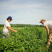 20120705 Root Mass Farm