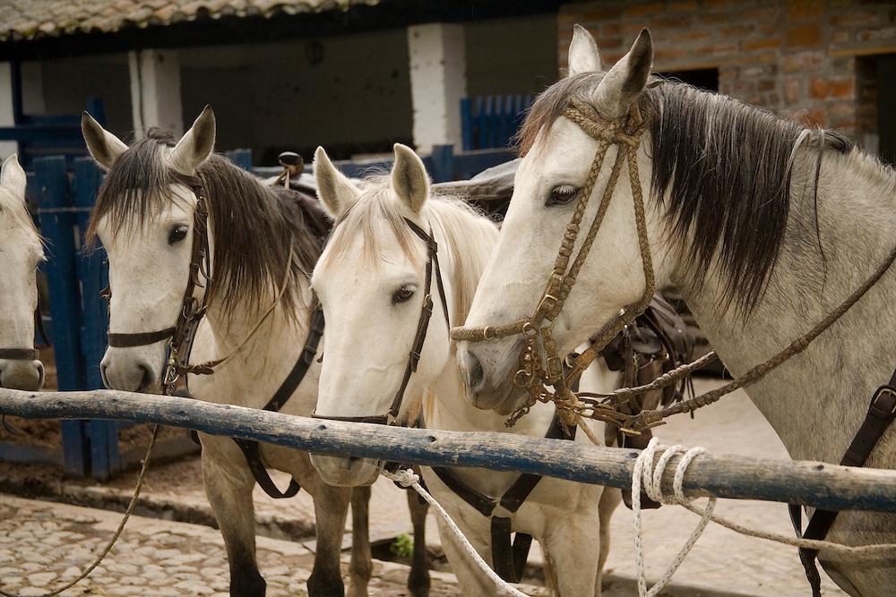 South America, Ecuador, Zuleta, horses in corral in Hacienda