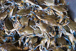 Washington DC, Food, fresh fish and shellfish market on Maine Ave, selling Chesapeake Bay blue crab and various fish, such as fillet of red snapper, all fresh and live off the boats.  Photo is of live blue crab from Chesapeake Bay,.Photo  wash99321-70720..Photo copyright Lee Foster, www.fostertravel.com, lee@fostertravel.com, 510-549-2202.