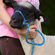 20120524 CAN SHEEP