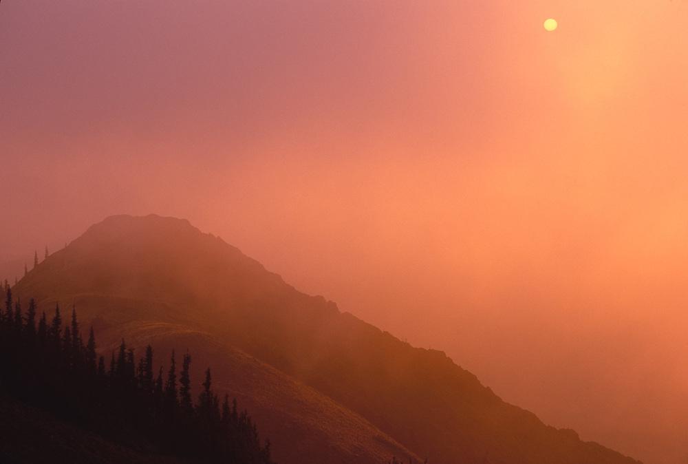Blue Mountain fog, Olympic National Park, Washington, USA