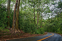Road to Hana, Maui (#2)