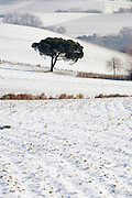 tree standing in a wintery landscape