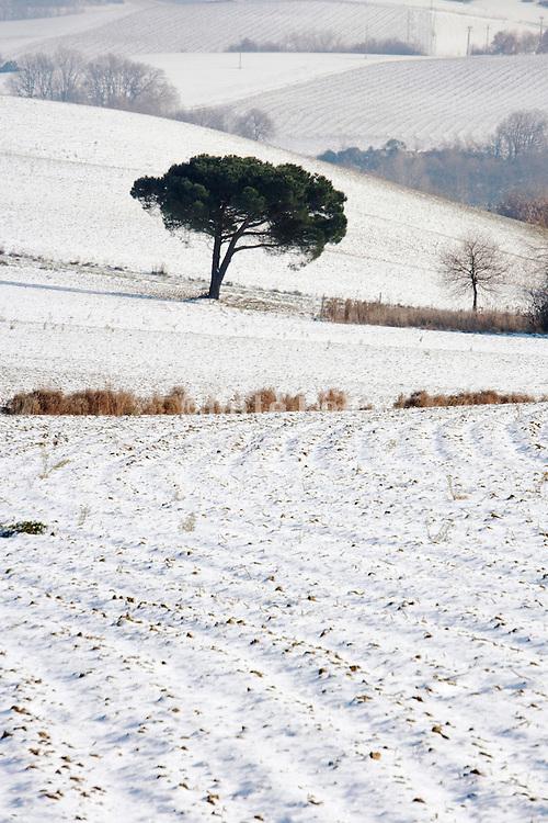 tree standing in a wintery landscape