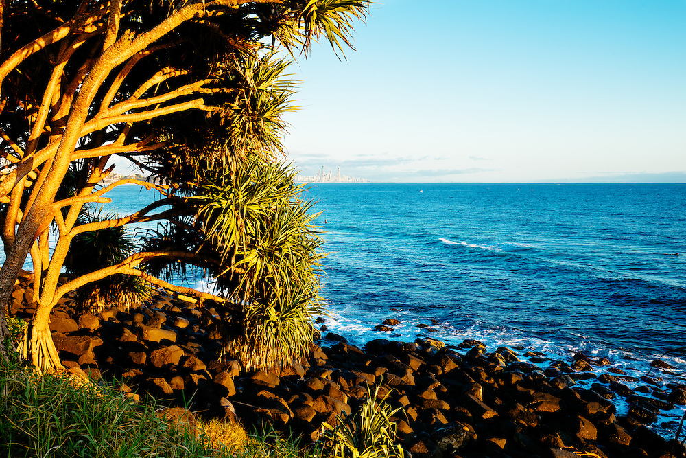 Pandanus tree lit up early in the morning with Surfers Paradise in the distance. Burleigh Head National Park.