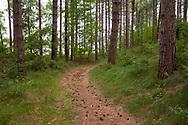 forest of the nature park Oranjezon near Vrouwenpolder on the peninsula Walcheren, Zeeland, Netherlands.<br /> <br /> Wald im Naturpark Oranjezon bei Vrouwenpolder auf Walcheren, Zeeland, Niederlande.