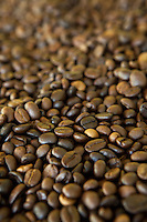 Raw Arabica Coffee Beans at Akha Ama Coffee