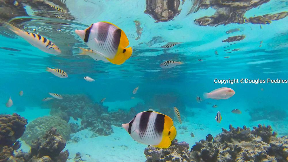 Drift Snorkel, Tahaa, French Polynesia, French Polynesia
