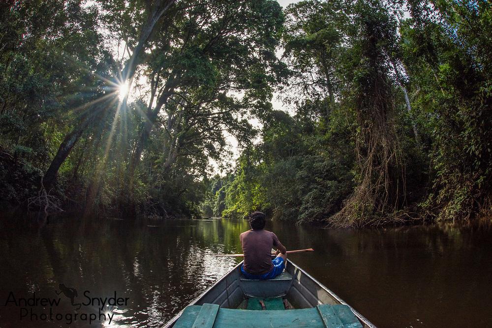 Exploring the biodiversity in Mapari Creek - Kanuku Mountains, Guyana