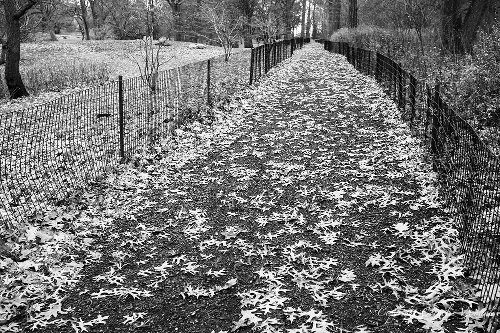 Autumn leaves on a woodland path west of The Great Lawn in Central Park