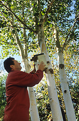 Alan Titchmarsh putting up a bird box on a silver birch tree