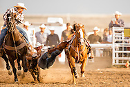 Rocky Boy Rodeo-Bulldogging-Steer Wrestling-Rocky Boy Indian Reservation-Montana-Indian Cowboys