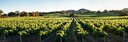 Wine Country Vinyard Hills