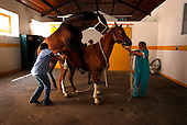 Nature - Lusitano Horse Breeding