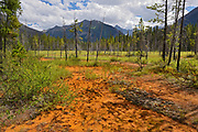 Paint Pots. Iron-rich cold mineral springs.  The Canadian Rocky Mountains, Kootenay National Park, British Columbia, Canada