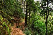 Forrest in Rwanda. Photoart. Paint effect added | Skog i Rwanda. Fotokunst. Malerisk effekt lagt til.