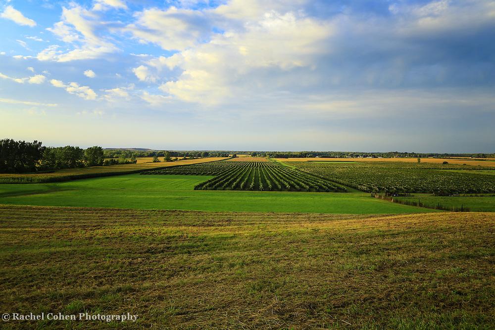 """Vineyards Lewiston New York""<br /> <br /> Scenic vineyards and farm land in Lewiston New York!!<br /> <br /> Landscapes by Rachel Cohen"