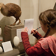 8 year old girl makes a sketch of a puffin at a science museum exhibit.