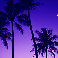 palm trees at dusk with crescent moon