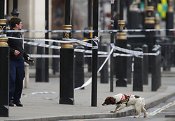 A Police dog and handler close to the Palace of Westminster, London, after policeman has been stabbed and his apparent attacker shot by officers in a major security incident at the Houses of Parliament.