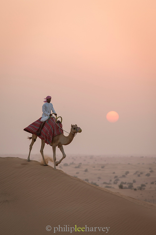 Man, with camel in the desert near Dubai, United Arab Emirates