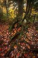 Ottawa National Forest<br /> Michigan's Upper Peninsula