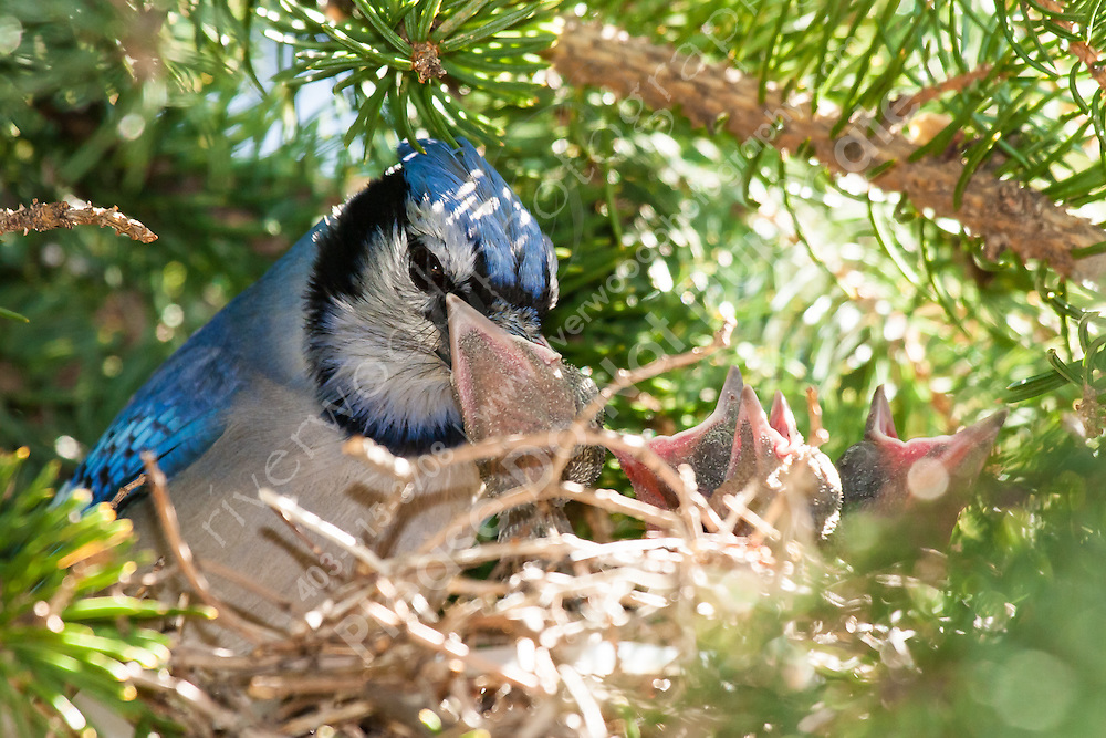 This is just a preview of 100's of images I made this morning at my friends house.  the eggs hatched this week!<br /> <br /> ©2009, Sean Phillips<br /> http://www.Sean-Phillips.com