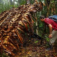 Rosewood logging in Madagascar by Chris Maluszynski
