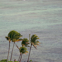 Palm trees grace this little man-made island off the beach at The Kahala Hotel & Resort, Honolulu, Hawaii.