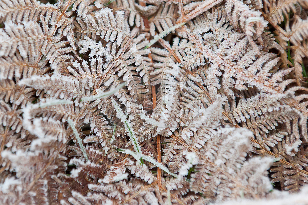 © Licensed to London News Pictures. 03/01/2019. Builth Wells, Powys, Wales, UK. Freezing morning weather on the Mynydd Epynt moorland near Builth Wells in Powys, Wales, at approximately 400 metres above sea-level where temperatures were around minus one degree centigrade. Temperatures drop to freezing overnight in Powys, Wales, UK. credit: Graham M. Lawrence/LNP