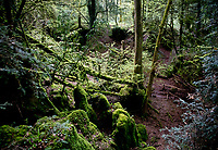 Puzzlewood is a ancient woodland site tourist attraction and film location , near Coleford in the Forest of Dean, Gloucestershire, England