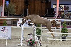 103, Cavalier Russe Z<br /> BWP Hengstenkeuring 2021<br /> © Hippo Foto - Dirk Caremans<br />  12/01/2021