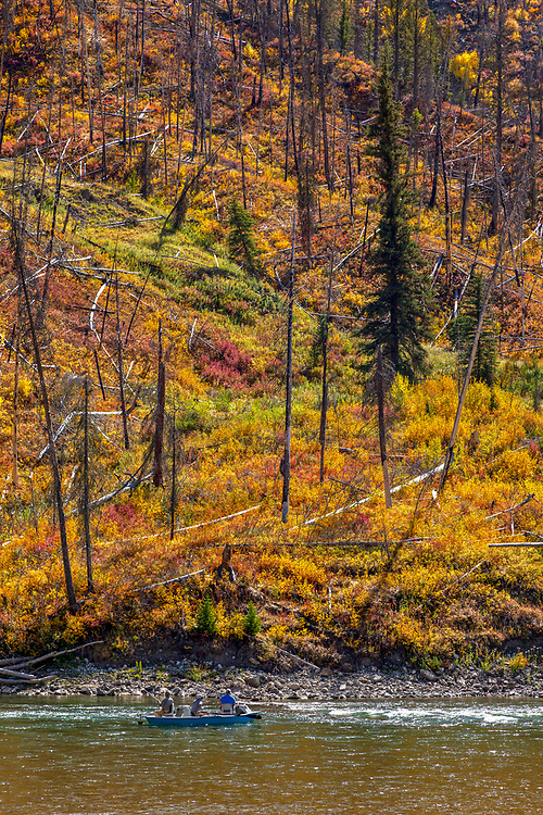 Drift boat fishermen admire the amazing fall colors along the banks of the Snake River near Jackson Wyoming