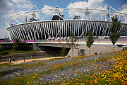London, UK. Thursday 9th August 2012. London 2012 Olympic Games Park in Stratford. Gardens of wild flowers surround the Olympic stadium. The site is beautifully landscaped all blooming with different colours. It gives a very natural feeling to the park.