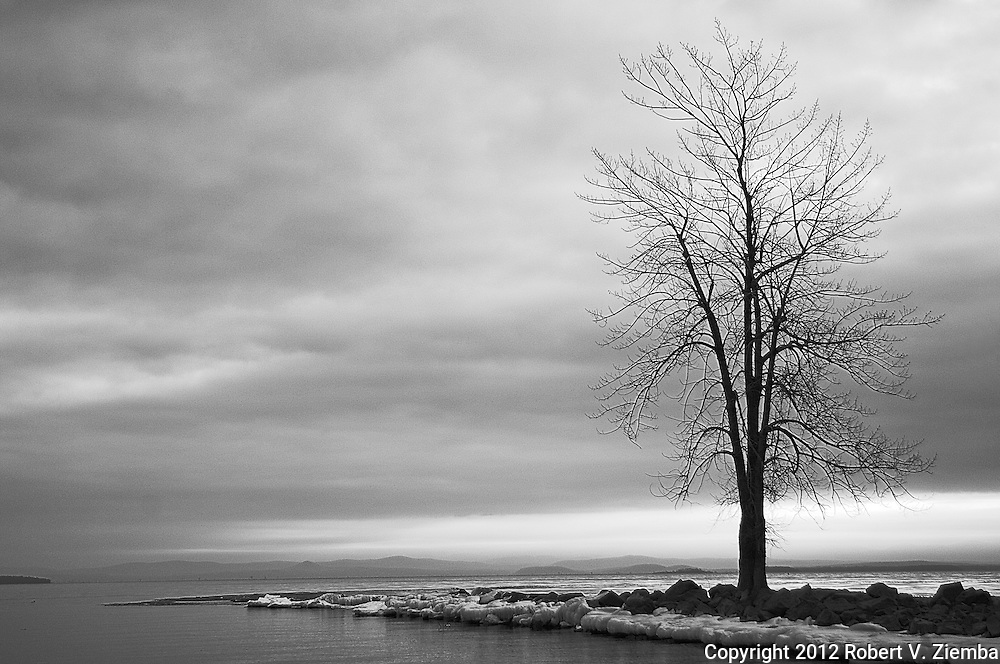 """""""Dawn at Ausable Point""""-A black and white image of a lone tree on Ausable Point on Lake Champlain."""