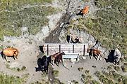 Ivan Hefti (30) von Swiss Helicopter wartet auf der Alp Neges bei Vanescha GR auf Wasser. Die Kuehe warten bereits und nehmen den Brunnen in Beschlag. 3. August 2018. Photo Siggi Bucher