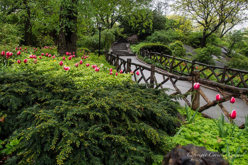 Rustic fences near Shakespeare Garden in Central Park.